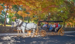 Carriage ride in Lexington